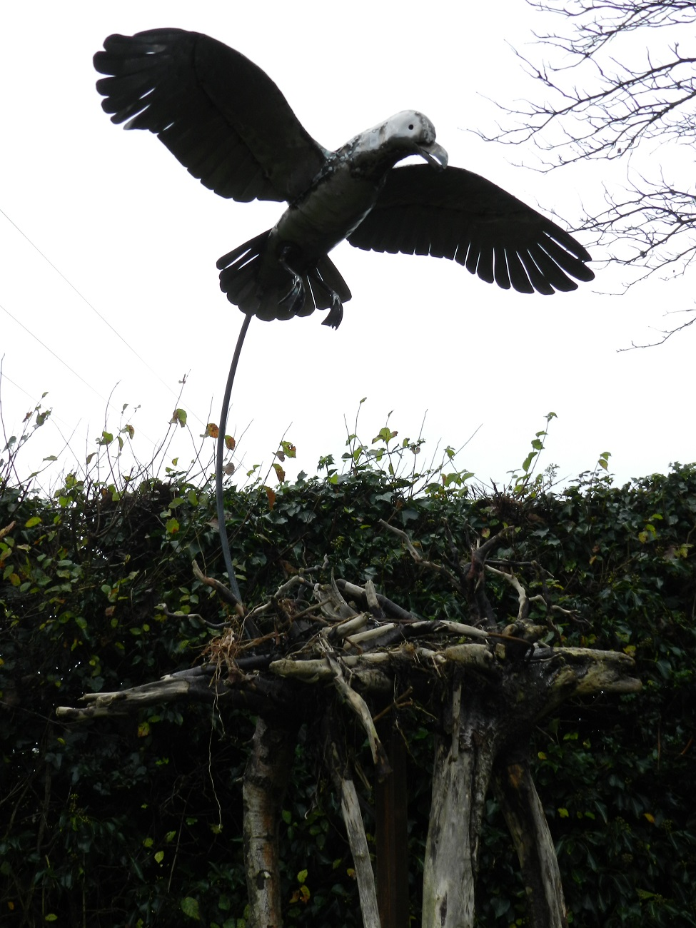 Seagulls Nesting