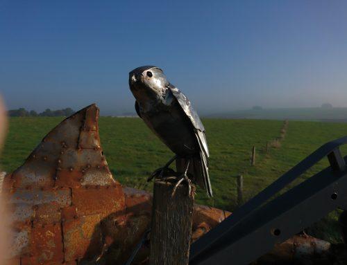 Kestrel – Enjoying the View